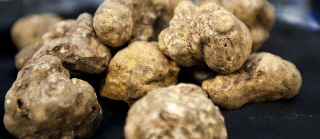 Istria white truffles - Istarski tartufi in Croatia