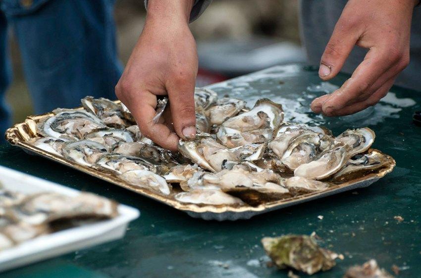 Oysters from Mali Ston - Malostonske kamenice