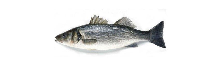 Brancin fish in Croatia