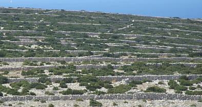 Tezacki labyrinth on Srima peninsula in Sibenik, Croatia