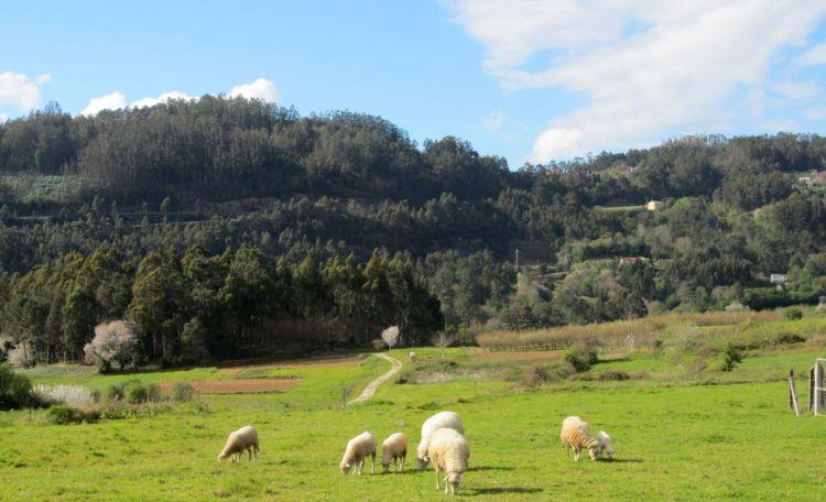 landscape in galicia i love spain