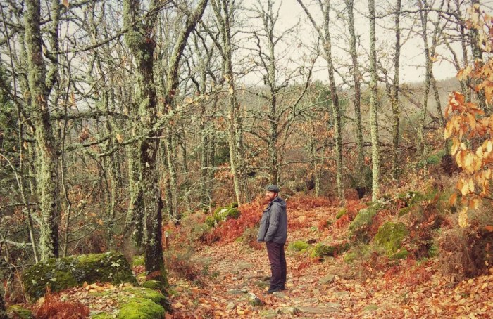 daniel spanish forest