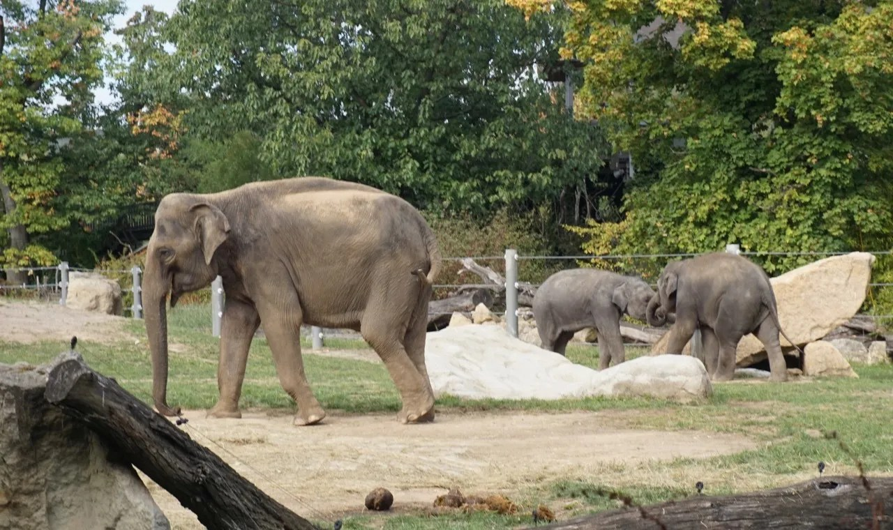 elephants in prague zoo
