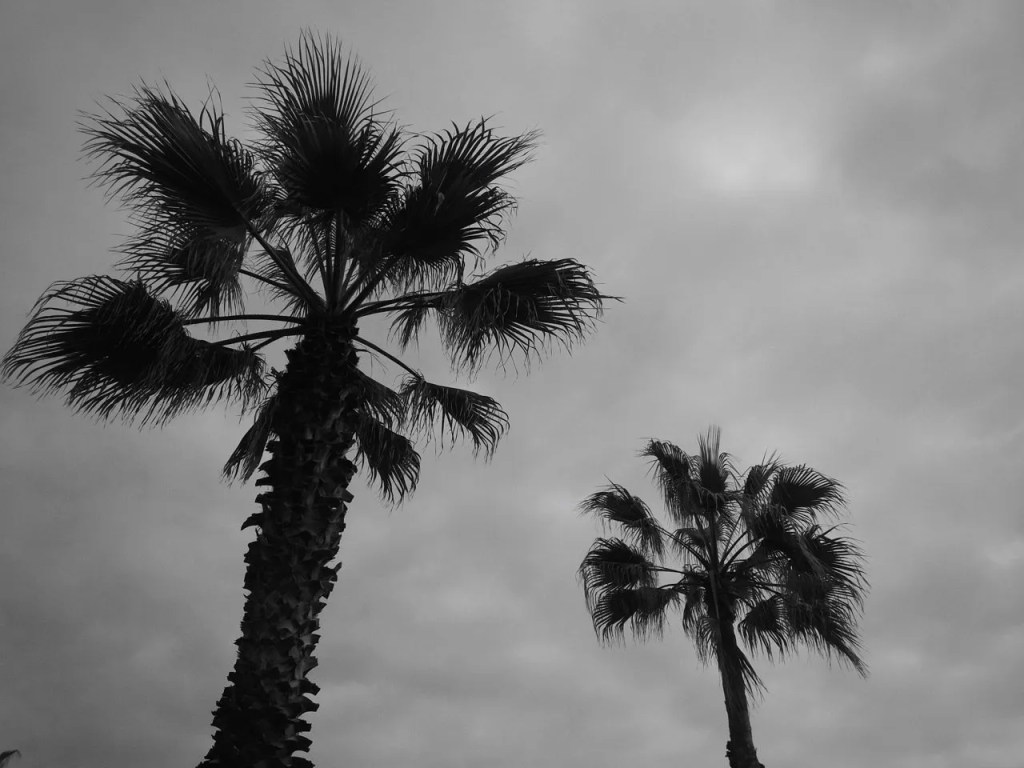 palm trees barcelona