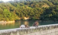 Monkeys chilling in Monkey Hill