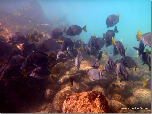 Un banc de poisson vient nous rendre visite, Galapagos, Equateur.