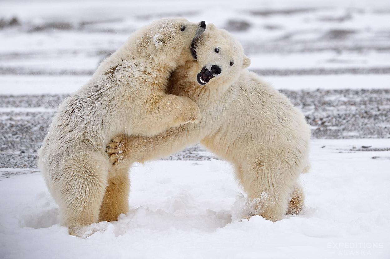 Expeditions Alaska Favorite Photos Wildlife Photos
