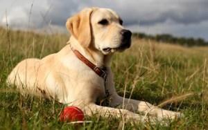 Dog friendly holiday, Fermanagh Lakelands, Enniskillen,