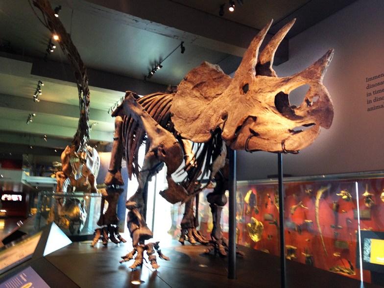 LA Nat Hist Museum