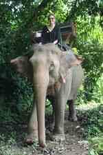 Elephant Riding – The Ethical Dilemma