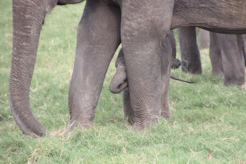 Mother and Baby Elephant at Wilpattu National Park taken by ETG traveller Michele Summer 2015