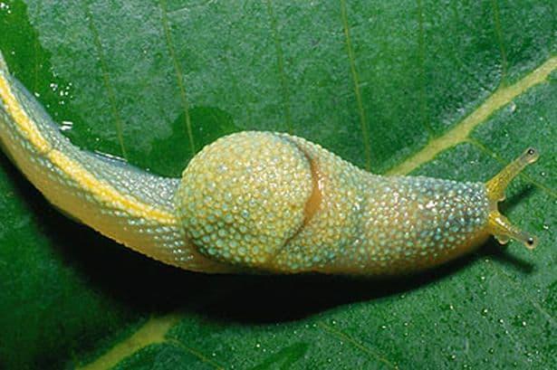 slug-pic-pa-815984718