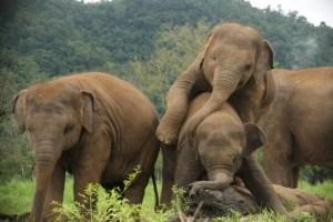 elephant-nature-park-1-1024x682