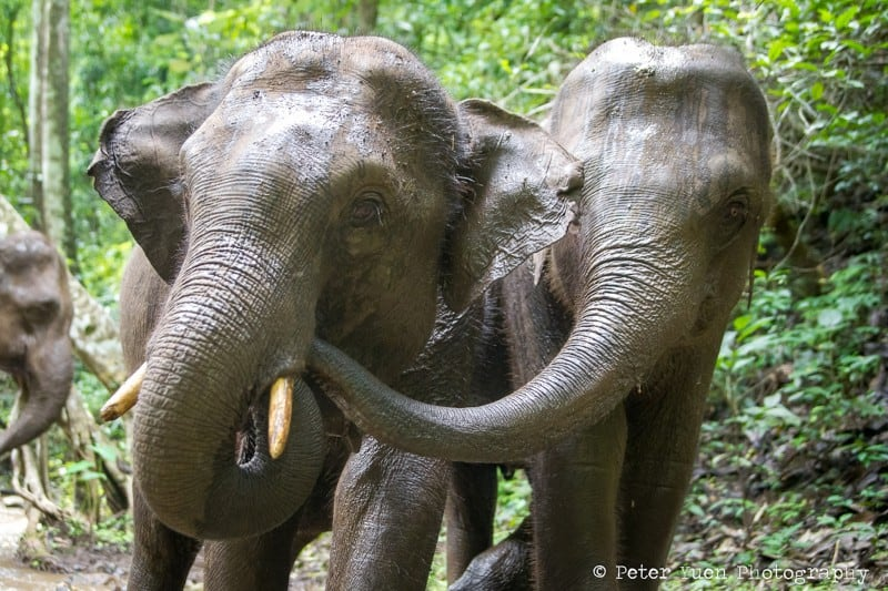 elephants-aq2i0168-copy-8