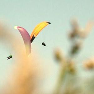 Curso de iniciación al parapente en Bizkaia