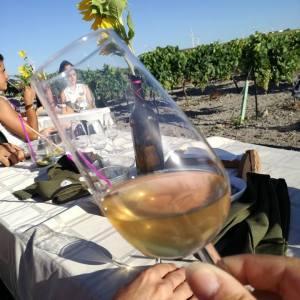 Grupo de personas en un viñedo en Cadiz