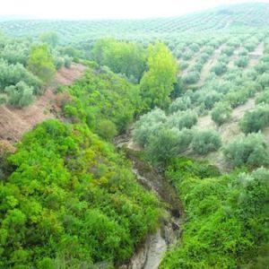 La Vía Verde en Cabra en Córdoba