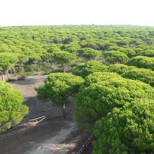 Bosque en el parque natural de la Breña y Marismas del río Barbate en Cádiz