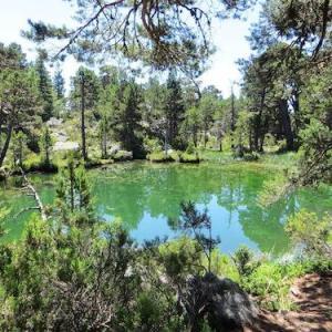 Vistas de los pinos de la laguna Verde en Soria