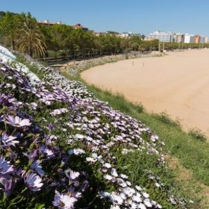 Flores en Playa Grande en Calella en Barcelona