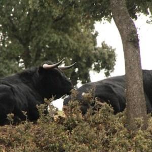 Visita guiada ganadería en Segovia