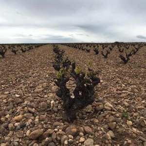 La ruta del vino de Toro