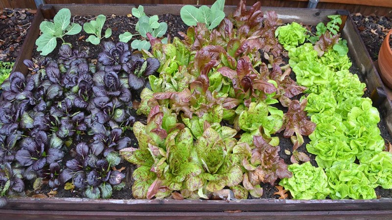 Fall and Winter Vegetable Gardening in Texas