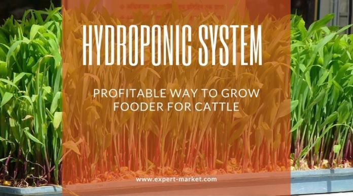 hydroponic farming in india
