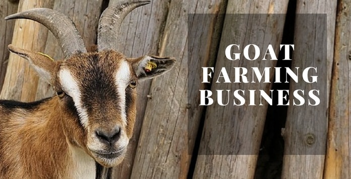 Goat Farming in Pakistan (Information and Guide)