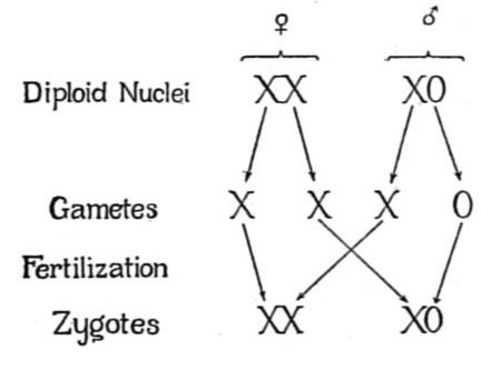 New (9-1) AQA GCSE Biology Paper 2: Inheritance, Variation