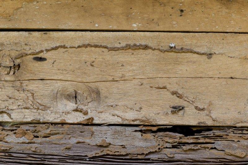 Une structure bois en mauvais état
