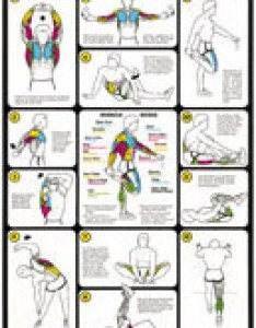 Exercise  muscle guide female weight training flexibility also expert leisure fitness testing graphs rh expertleisure