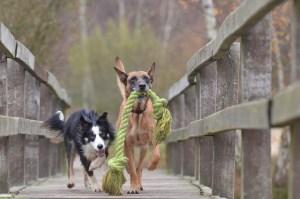 Kauspielzeug für Hunde lange Lebensdauer