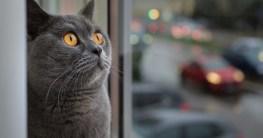 Katzenfensterplatz