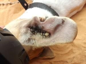 Zeckenmittel für Hunde