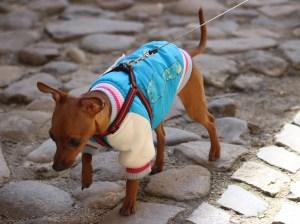 Hunderegenmantel Pullover überziehen