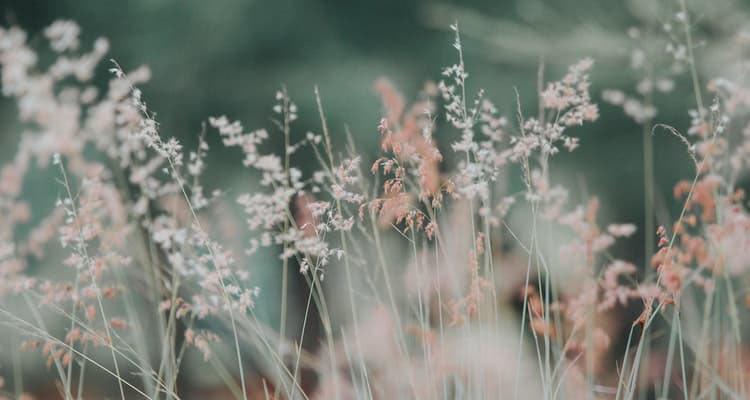 Pollengras-Allergiker
