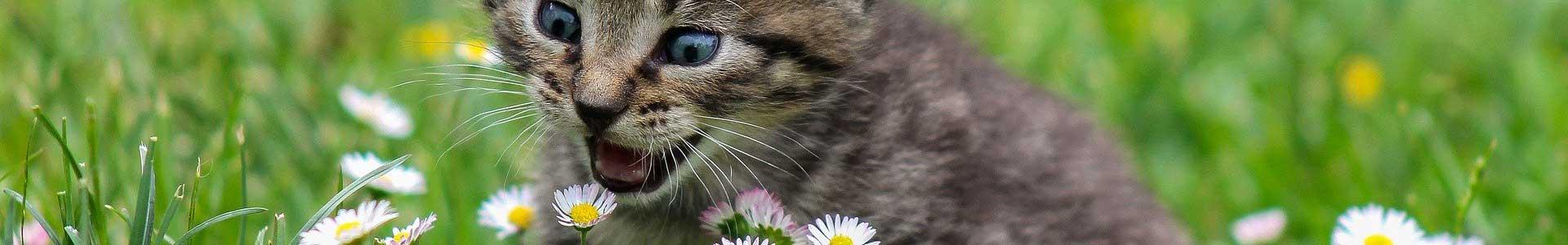 Katzenbedarf-Test