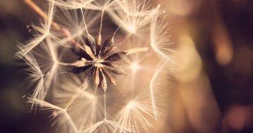Pollenschutzgitter Test