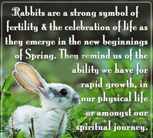 Rabbit Equals Fertility