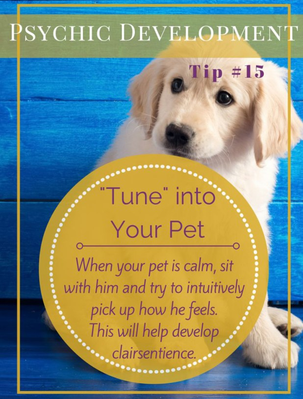 A Pet Can  Help You Build Up Clarisentience