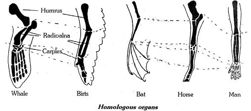 Morphological and anatomical evidences of evolution, Biology