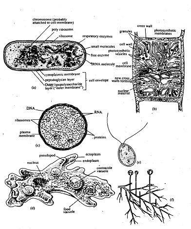 Unified cell theory, Unified Cell Theory The present