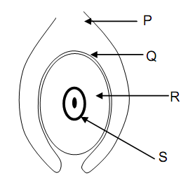 Define ovule, A vertical section of an ovule is shown