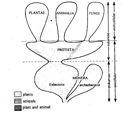 Protozoans, Protozoans Prokaryotes represent only a few