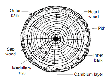 Cross-section of exogenous tree, Civil Engineering
