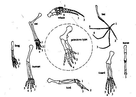 Implication of five kingdom classification, Biology