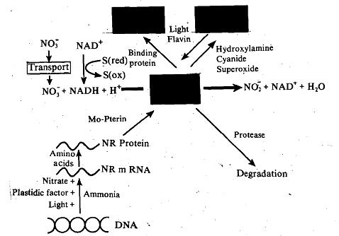 Enzyme-activity control, Enzyme-activity Control