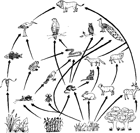 Food web, Food Web: Within an ecosystem, there are many