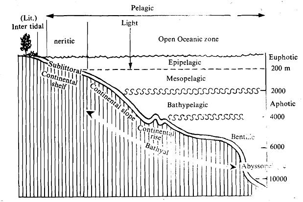 Organisation of the marine ecosystem, Biology